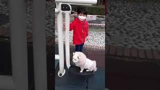 알롱이 #놀이기구 태워주기 #강아지