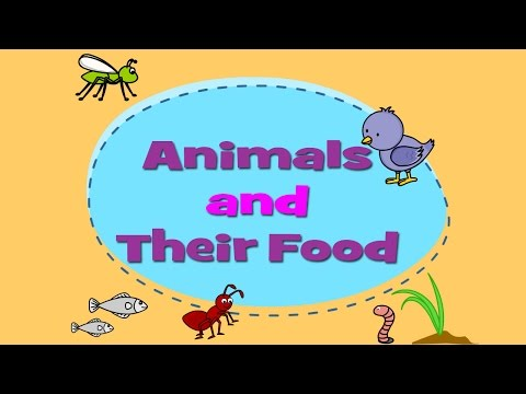 Animals and Their Food - Learn About Animals For Kids