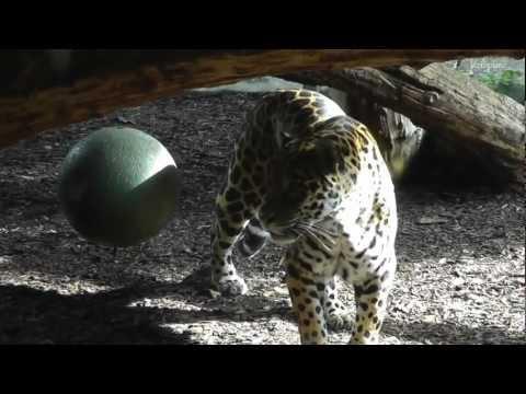 Vienna Zoo - Tiergarten Schönbrunn