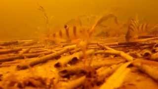 Зимняя рыбалка. Зимний окунь. Мормышка. 30.12.2012(Видео от нтернет-магазина КРЮЧОК.net (http://kruchok.net/index.php?option=com_virtuemart&view=virtuemart&Itemid=435), 2012-12-30T23:13:04.000Z)