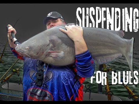 Suspending for Blue Catfish: Wilson Lake, Alabama  ft. Bottom Dwellers Tackle  Northwoods Angling