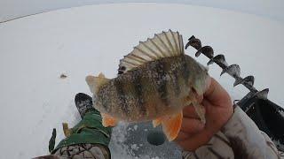Ловля окуня на мормышку на озере Сартлан весенний клёв очень радует