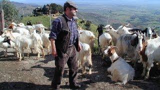 Pastori custodi del territorio