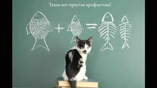 СМЕШНЫЕ КОТЫ И КОШКИ лучшее смешное видео за месяц (2019) – Смешные кошки МатрсокинТВ (Котоматрица)