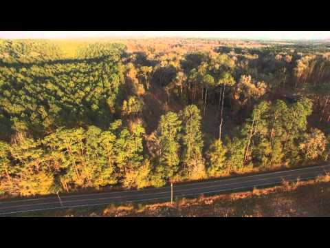 Southwood Plantation road clearing