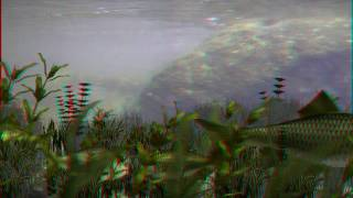 iClone4 AnaGlyph Red/Cyan Stereo Fish