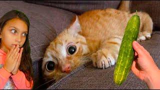 СМЕШНЫЕ КОТЯТА ИДУТ В ШКОЛУ в ЛАЙК и ТИКТОК 6 Коты и Собаки ЗАСМЕЙСЯ ЧЕЛЛЕНДЖ Funny Cats Валеришка