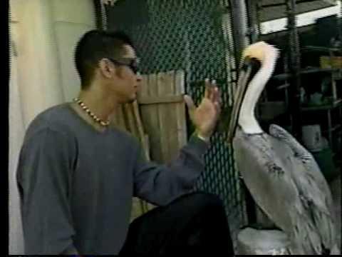 Anthony Galindo - El Papijoe - Control - Pelicans