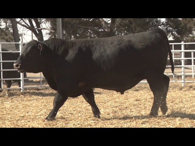 Express Ranches Lot 275