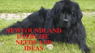 Newfoundland Dog Exercise [Needs and Ideas]