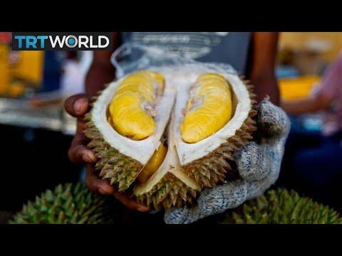 Durian Demand Raises Stink In Malaysia   Money Talks
