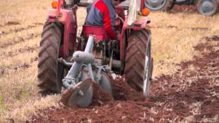 MF 135 Tractor pulling Ferguson Disc Plough in Wheat stubble
