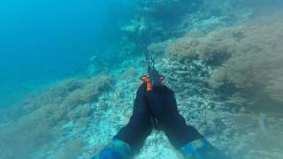 WET DREAMZ  SPEARFISHING - Blue Territories