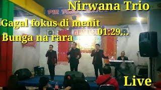 Live Nirwana Trio Terbaru Sekali, Gagal Fokus dimenit 01:29, kok bisa..??, Bunga narara (cover)