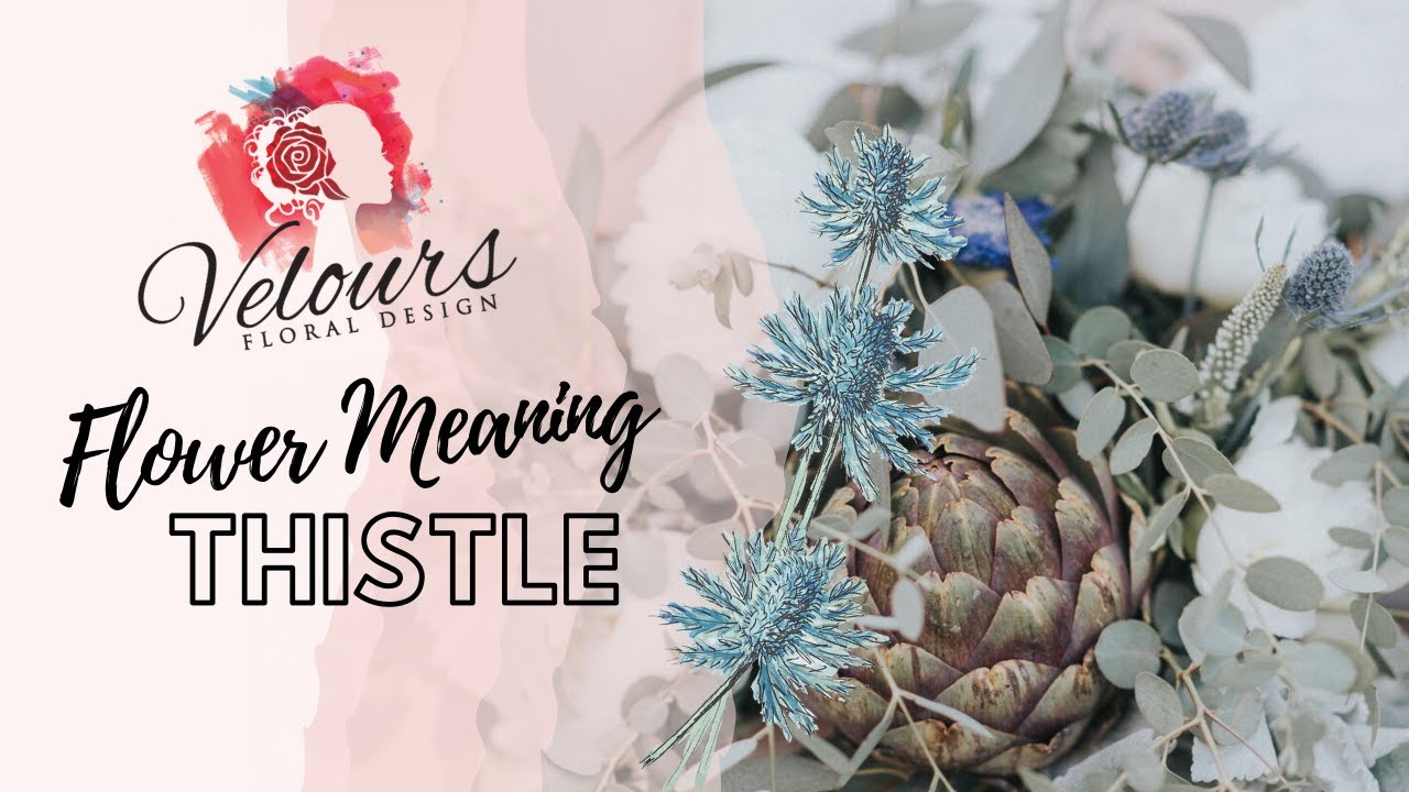 Thistle Flower Meaning - YouTube
