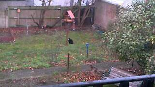 Cat Trying To Catch Squirrel On Bird Table
