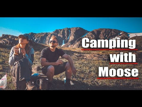 🦌 Camping With Moose - Never Summer Wilderness Adventure