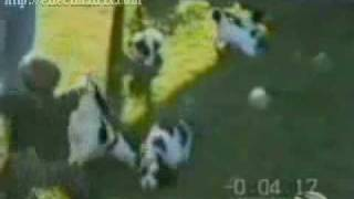 » perros graciosos videos chistoso