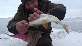 Последний час рыбалки спасает от пролета. безмотылка крупная плотва.