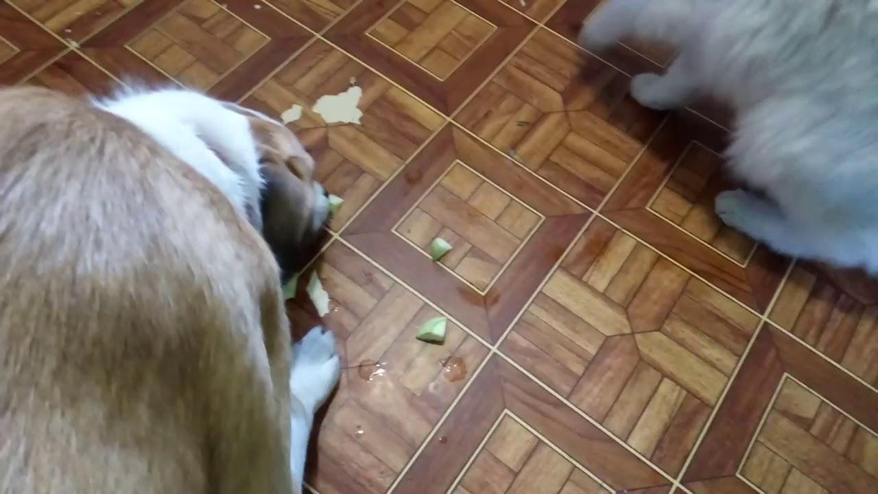 Кот веган и собака веган - YouTube