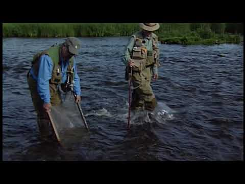 River Trout Food | How To Determine
