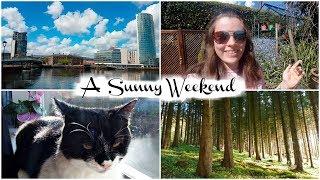 Sunny Weekend, Filming Recipes, Forest Walks & Belfast | Jenny E