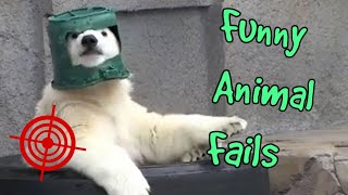 ► NEW ANIMAL FAILS  2018 🔥 🙊 FUNNY COMPILATION (Cats, Dogs, Wild Animals)