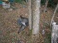 お母さんに木登りを止められた子猫ちゃん^^kittens stopping tree climbing【いなか猫1747】japanese funny cat