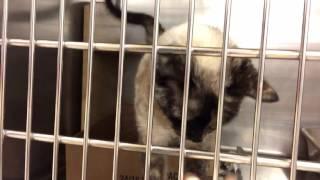 Кошка с отрезанными лапками