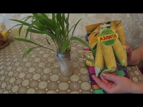 Фасоль кукуруза огурец салат
