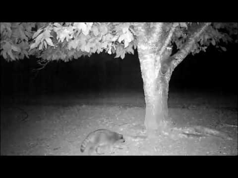 24 hours under the Bing cherry tree