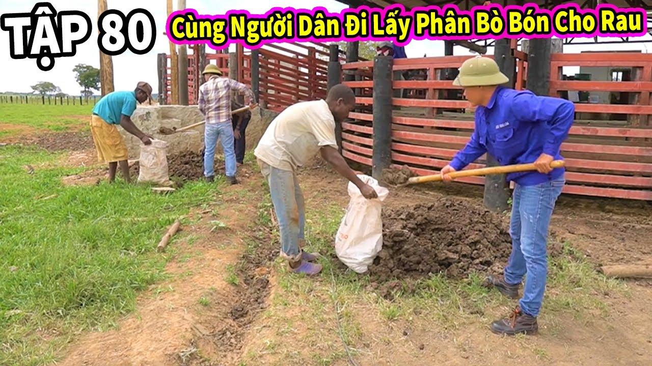 (Tập 80 ) Nông Nghiệp VIỆT NAM ở Châu Phi || Team Cùng Người Dân Đi Kiếm Phân Bò Để Bón Cho Vườn Rau