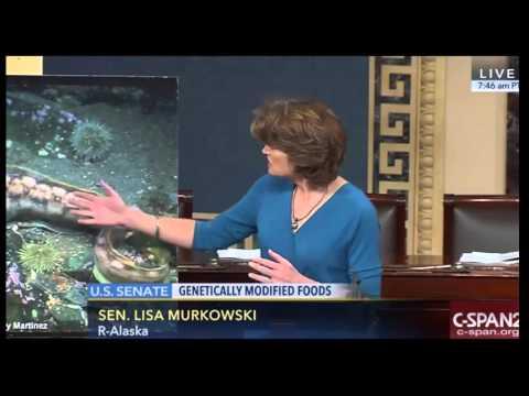 Lisa Murkowski Makes Case Against Genetically Engineered Salmon   Frankenfish   GMO Foods Hearing