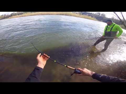 Cowlitz River STEELHEAD DRIFTING FISHING