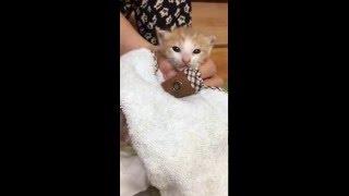 4週目になった子猫の排泄促し thumbnail