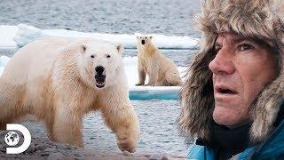 Acorralados por un oso polar hambriento | Expediciones con Steve Backshall | Discovery Latinoamérica