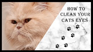How to clean Persian Cat eyes