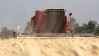 Wheat Harvest - Celebrating Kansas