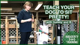 Teach Your Dog to SIT PRETTY!