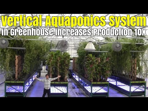 Vertical Aquaponics System use Bamboo Towers in Greenhouse to Increase Production 10x