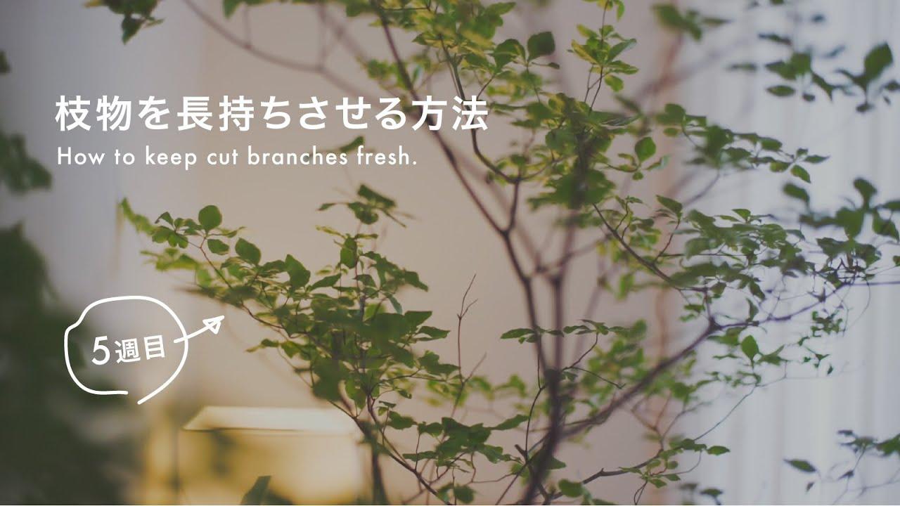 枝物を長持ちさせる方法(ドウダンツツジ)(フラワーベースへの固定)