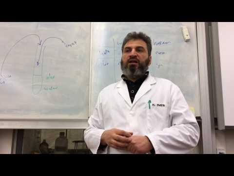 Oplosbaarheid en Polariteit Experiment - Polar and Non-polar Solubility
