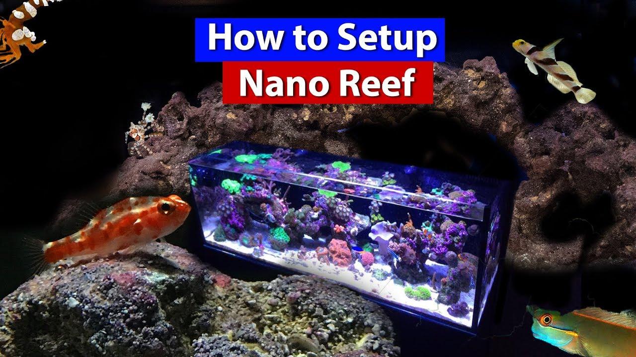 how to setup a nano reef tank aquarium on a budget youtube