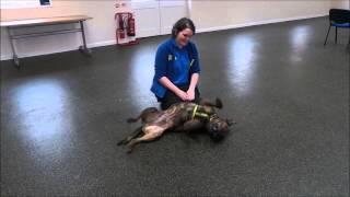 Dogs Trust Loughborough - Toffee