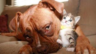Самые смешные животные Приколы с котами и собаками 2021 19