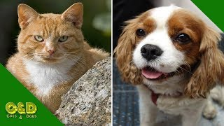 Funniest Dogs and Cats Doing Funny Things | Funny Cat and Dog Pet Animals Video Compilation 2019