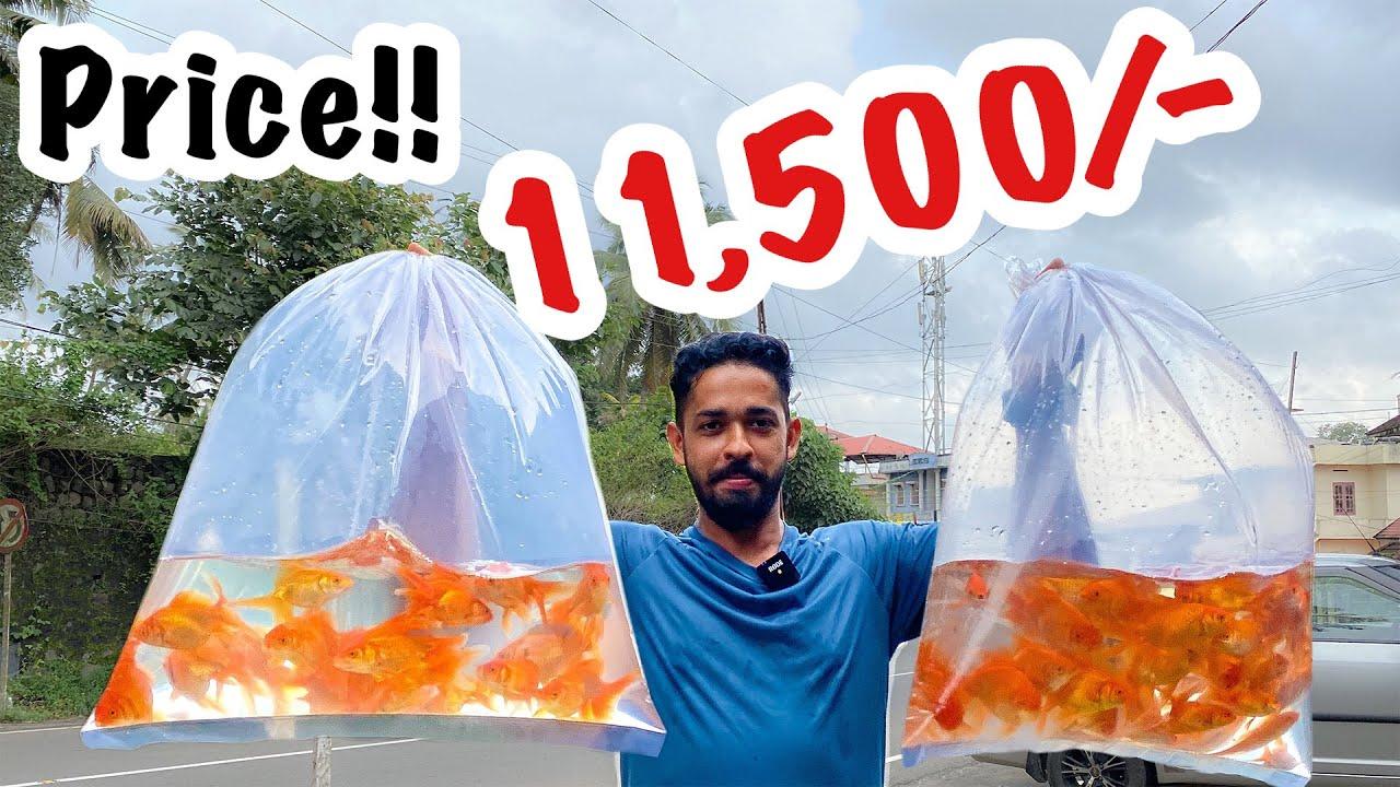 """കടയിലെ മുഴവൻ""""Gold Fish""""മേടിച്ചു   Bought 60 Gold Fishes For My pond DIY Pond  Miniforest in Backyard"""
