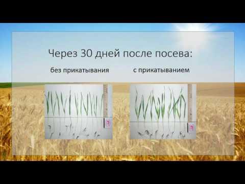Послепосевное прикатывание - рост урожайности на 17,5 %