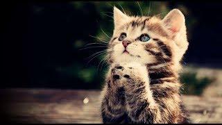 Смешные коты и кошки. Толстые коты. Приколы с котами