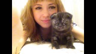 Дейзи и котята. Daisy and her kittens.